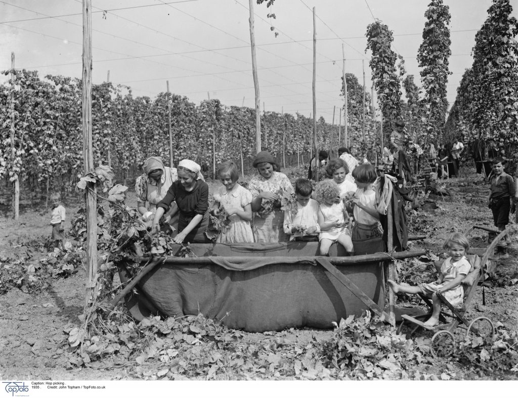Hop picking . 1935 .