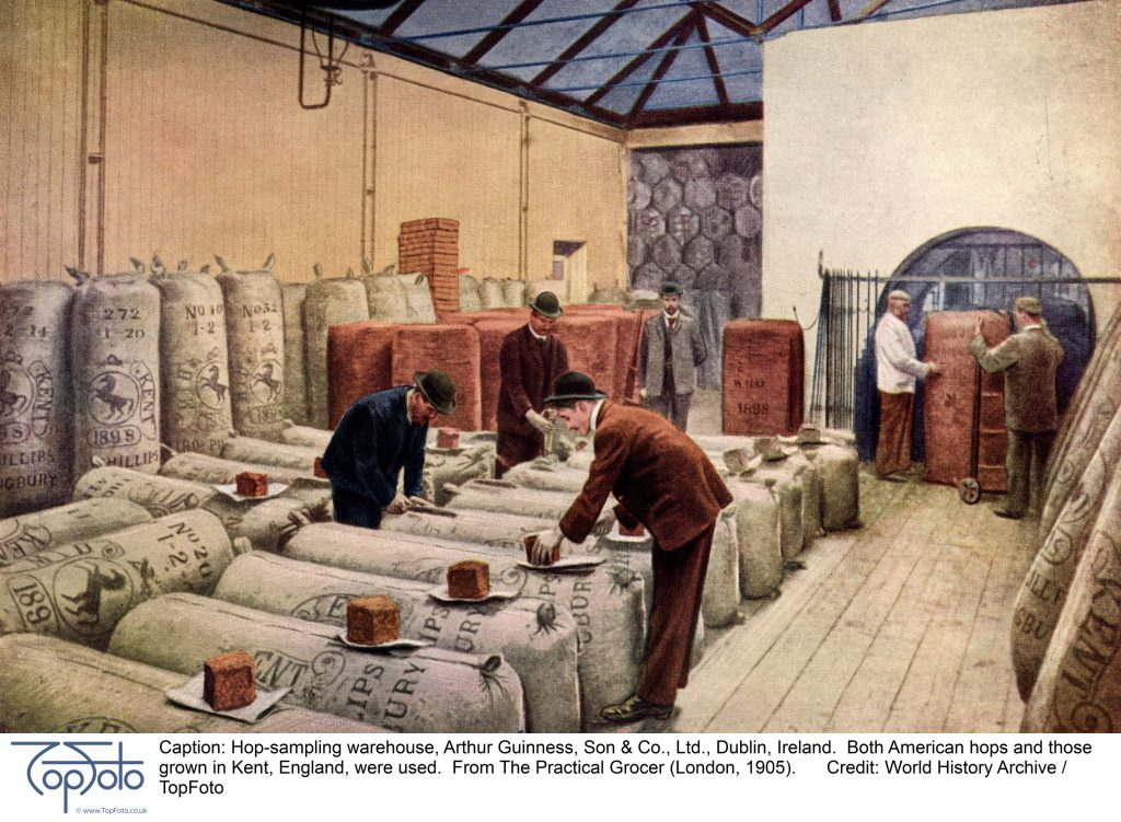 Hop-sampling warehouse, Arthur Guinness, Son & Co., Ltd., Dublin, Ireland. Both American hops and those grown in Kent, England, were used. From The Practical Grocer (London, 1905).